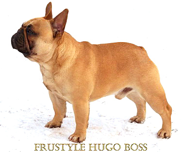 Frustyle Hugo Boss, 1.5 years old