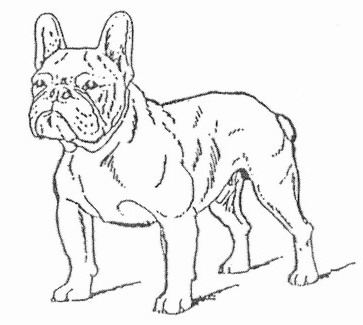 French Bulldogs Frustyle Moscow Russia Standart Of