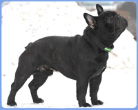 INVICTUS DEMAYROFRENCHIES BOULE & ONUBA
